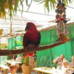 Papageienpark Bochum auf Kids Day 2018